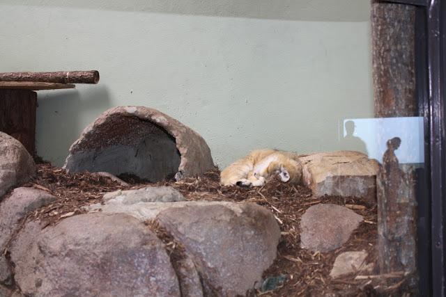 Zoo Snooze 2015 - IMG_7226.JPG