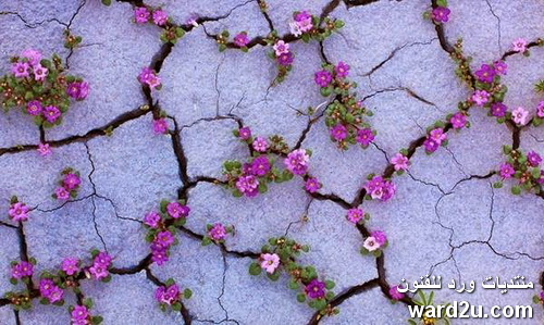 زهور نادره فى صحراء قاحله