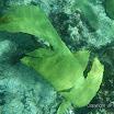 Buck Island Reef - IMGP2345.jpg