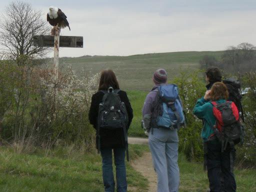 DSCF0562 Bald Eagle greeting visitors to Eagle Heights
