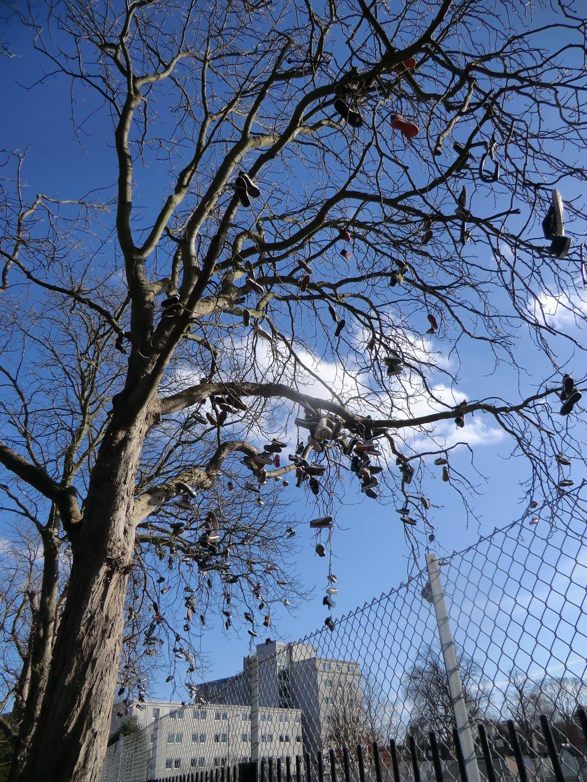 CIMG6716 A plimsoll tree?