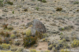 Looking down on another large boulder with petroglyphs.