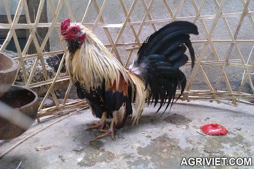 Agriviet.Com-IMAG0557.jpg