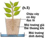 Các cách trồng rau thủy canh - 56874bc296278
