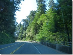Highway 101 south of Crescent City