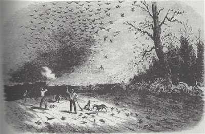 Shooting wild pigeons in Iowa. From Leslie's Illustrated Newspaper, 21 Sept 1867. This is figure 5, page 95, A Country so Full of Game, by J.J. Dinsmore.