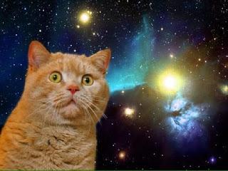 ekspresi kucing yang menggemaskan