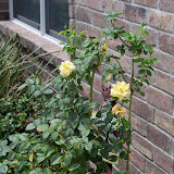 Gardening 2011 - 100_9504.JPG