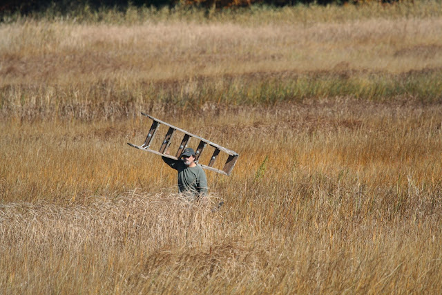 Guilford Salt Meadow Sanctuary Osprey Platform - 10-25-09%2B089.jpg