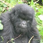 rwanda064.JPG