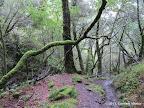 Carson Falls Trail