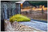 """Moss"" by Steve Bailey -- 2nd Place Digital Special ""A"" Group"