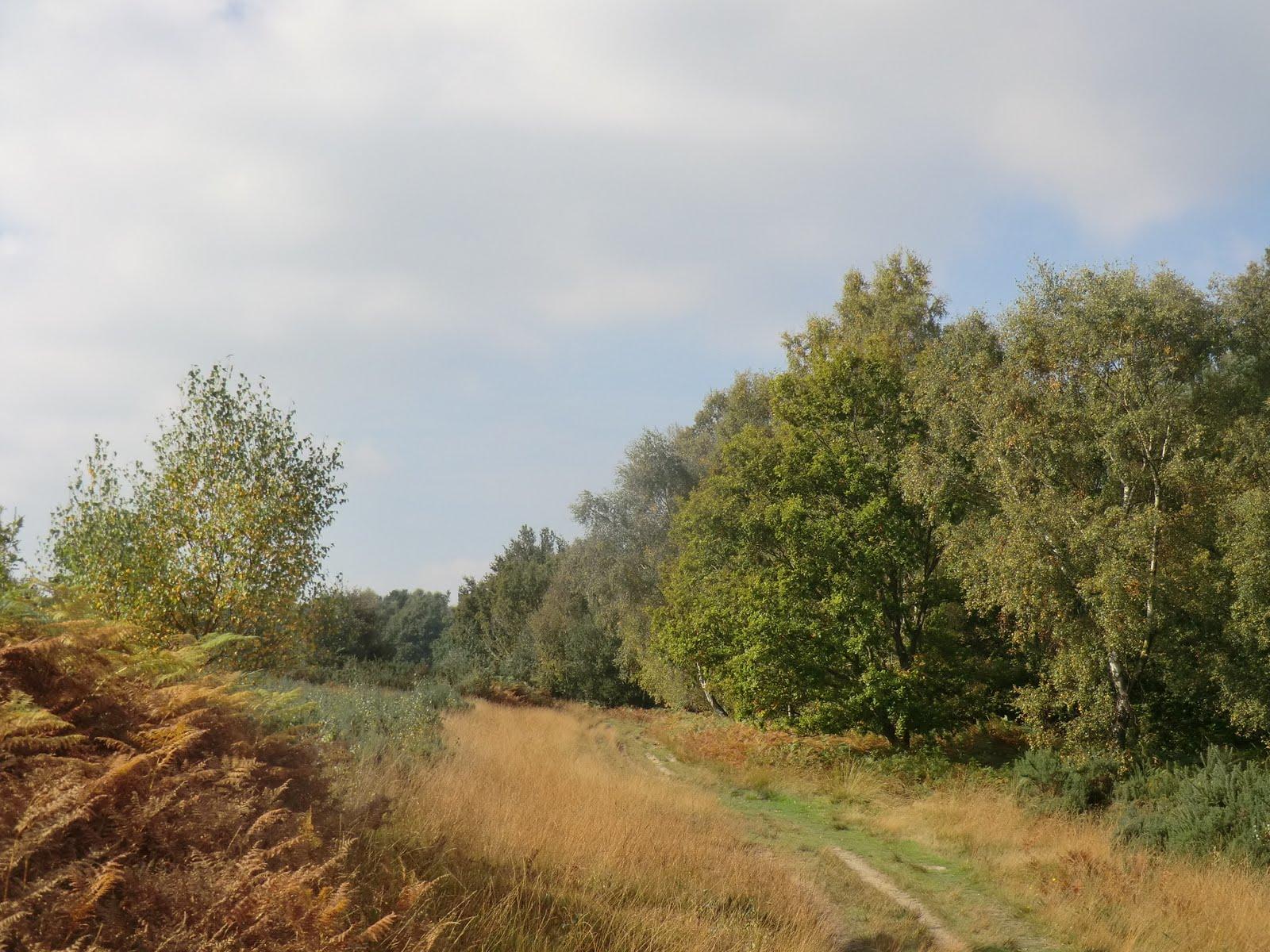 CIMG0823 Ashdown Forest