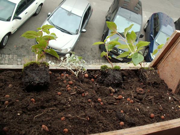 Jardinières en pallette avec mur végétal incorporé PICT0052