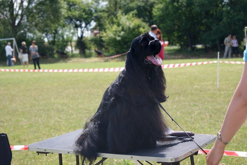 Wystawa psów - dsc00363.jpg