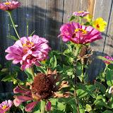 Gardening 2011 - 100_9266.JPG