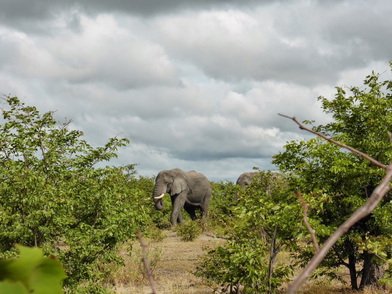 Wandelen in Okavangodelta