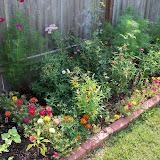 Gardening 2010, Part Two - 101_3036.JPG