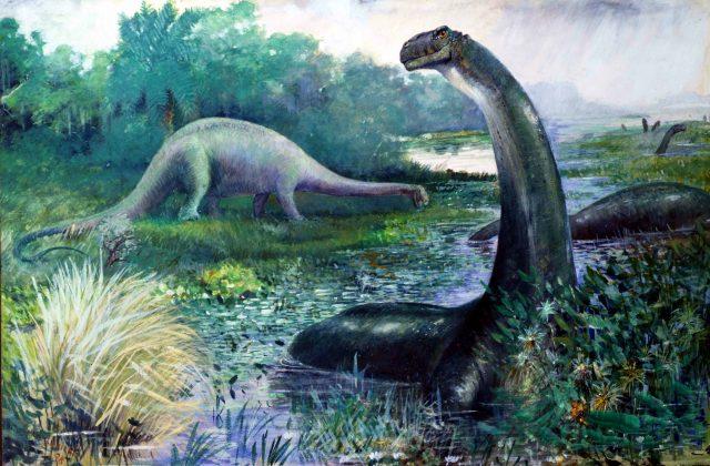 Fakta Menarik Brontosaurus Yang mungkin Anda Sukai  8 Fakta Menarik Brontosaurus Yang mungkin Anda Sukai