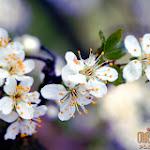 Flower 016_1280px.jpg