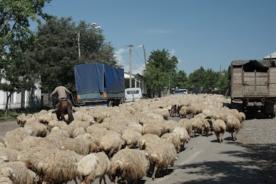 Schafherde in Dorf Tsintskaro