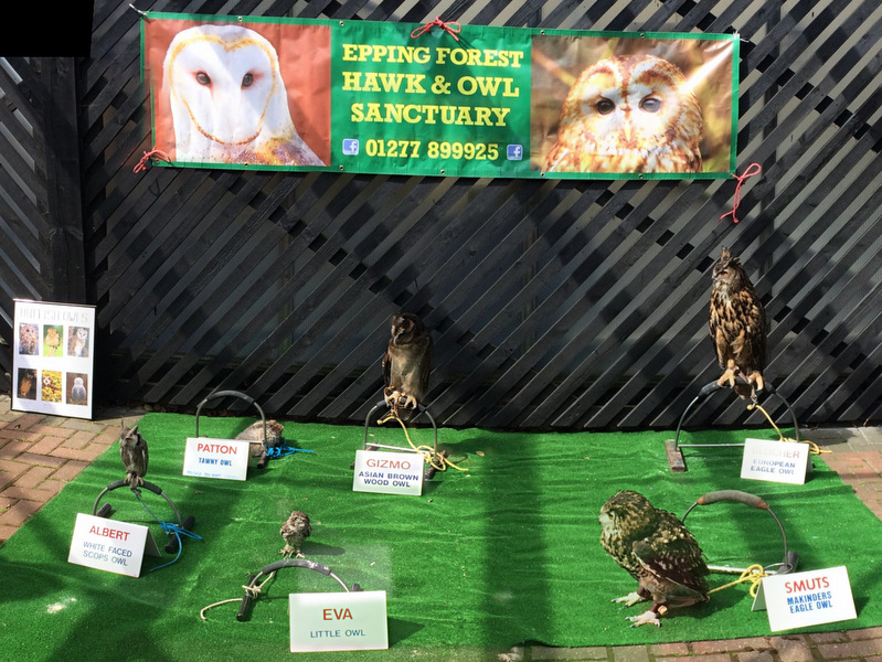 Collection of stuffed owls
