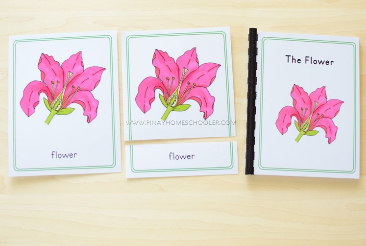 Montessori Inspired Parts of a Flower Nomenclature Cards and Booklet