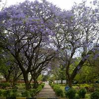 Springtime in Gaborone