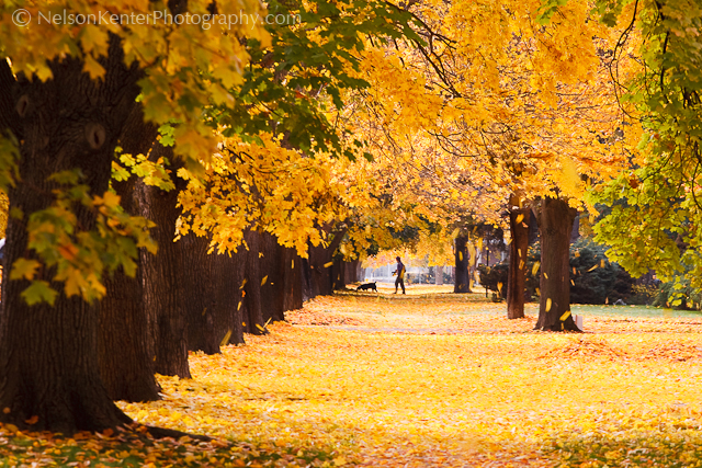 Missoula neighborhood in Fall Colors. Photo by Nelson Kenter. All Rights Reserved. Prints available at www.kenterphotography.com