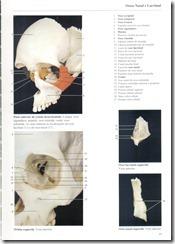 047 Osso Nasal e Lacrimal