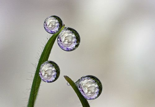 Flower in 50 Howling Examples of Dew Photography