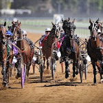 Real Life Harness Racing (2).jpg