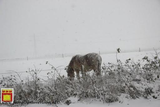 eerste sneeuwval in overloon 07-12-2012  (4).JPG