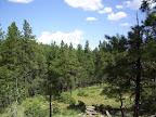 Ponderosa Pine forest of Arizona: Paseo del Lobo Section 33 (Photo by C. Davis)