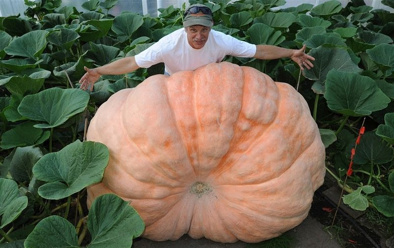 alaska-giant-vegetables-8