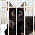 JULHO DOURADO: no mês dedicado ao combate ao abandono, Centro de Zoonoses incentiva adoção responsável de cães e gatos