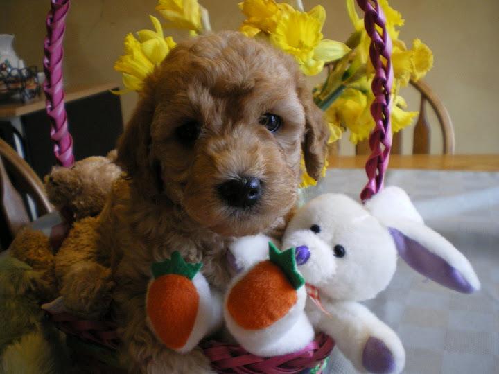 Happt Easter!
