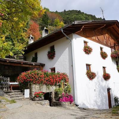 Flora & Fauna im Vinschgau