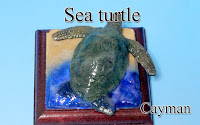 Lesser Cayman Iguana -Cayman-