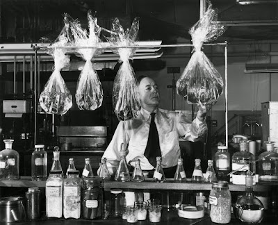 circa 1927:  A member of the team which invented moistureproof cellophane Dr Hale Charch re-enacts its production. A large bag on his left held water for weeks whilst other control bags showed evaporation in a few days. Invented in USA in 1924 at first it was not waterproof.  (Photo by Keystone/Getty Images)