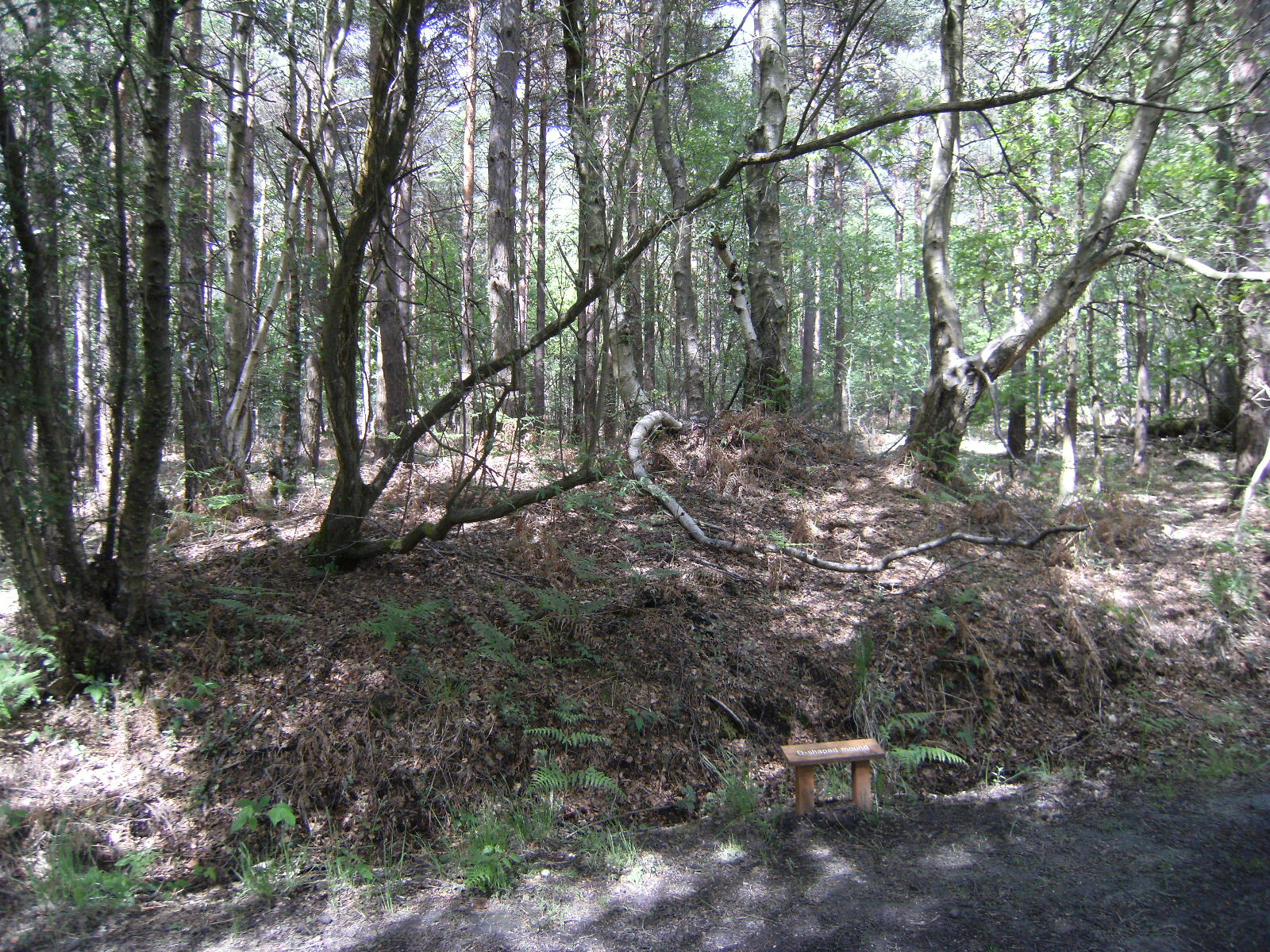 DSCF7828 'D-shaped mound' in Broadwater Warren