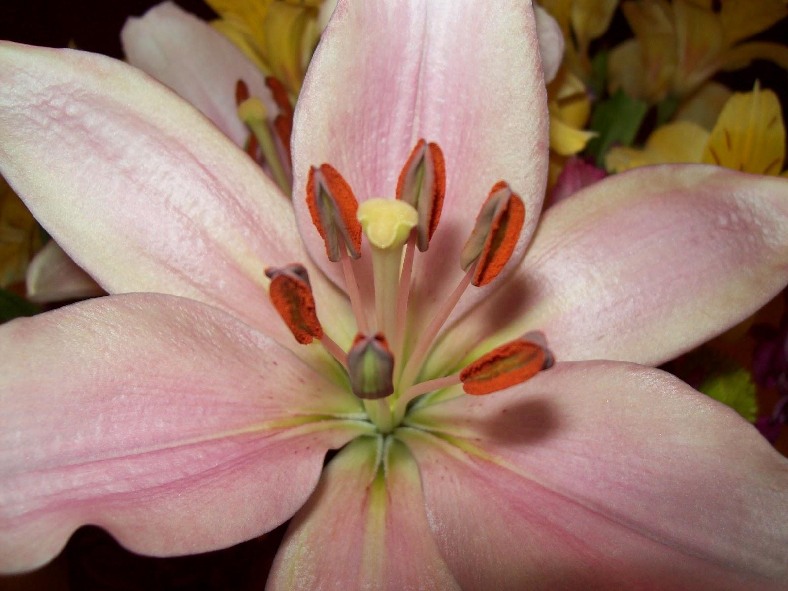 Bouquets - 101_2157.JPG
