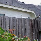 Gardening 2012 - 115_1675.JPG