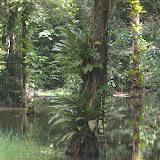 Guyane novembre 2011