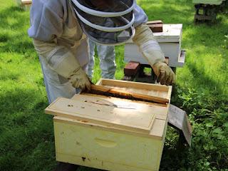 PLC Beekeeping Class 5/20/18 - IMG_8123.jpg