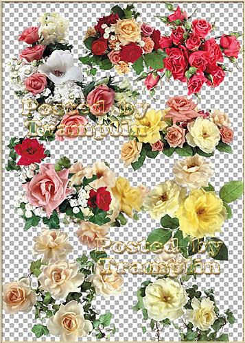 Розы – О дивной розе без шипов  давно твердят в стихах и прозе