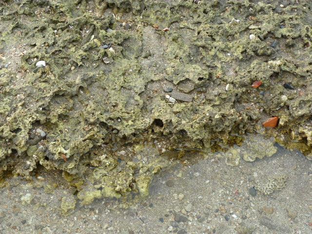 plateau corallien