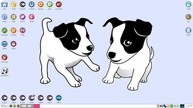 puppy-tahrpup6-desktop-491px