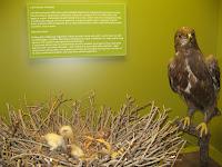 Részletek az Erdőjárók kalauza-Zemplén természeti értékeit bemutató kiállításból5.jpg