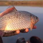 20150426_Fishing_Prylbychi_042.jpg